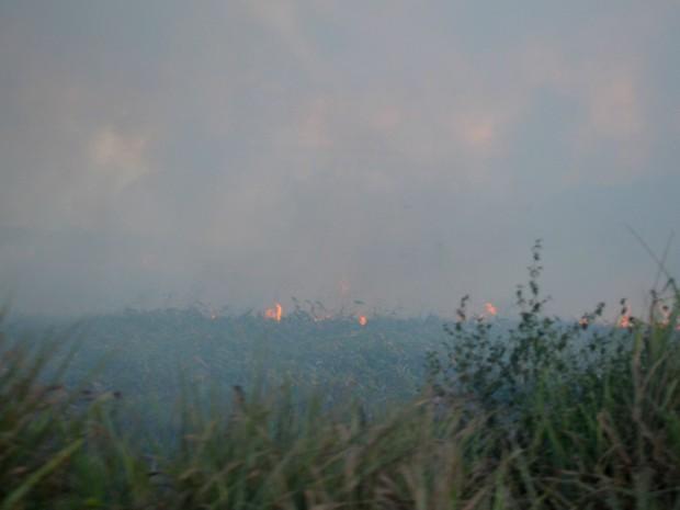 Queimada atinge vegetação da área há cerca de duas semanas, segundo moradores (Foto: Jéssica Alves/G1)