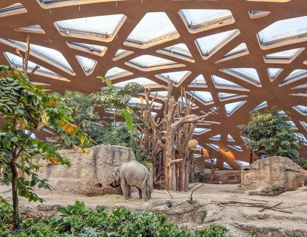 Casa de elefantes simula floresta da Tailândia (Foto: Por Adriana Mori | Fotos: Jean-Luc Grossmann/ Zoo Zürich/ divulgação)