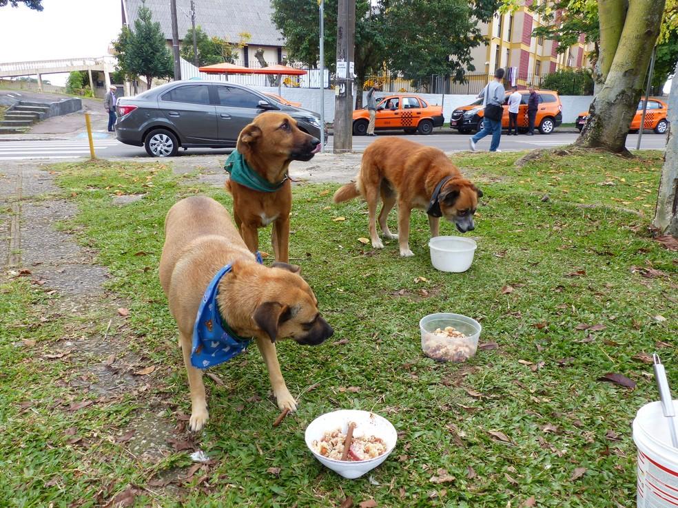 Cães recebem alimentação diária graças à ajuda da Neuza  (Foto: Adriana Justi/G1)