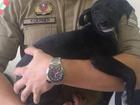 Cego e com marcas de maus-tratos, cão é resgatado de casa de suspeito