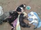 Mulher denuncia envenenamento de nove gatos no sul da Bahia
