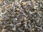 Milhões de abelhas morrem nos EUA após uso de veneno contra zika