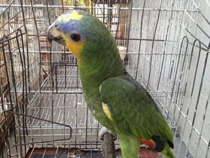 Um papagaio estava entre as aves apreendidas (Foto: Walter Paparazzo/G1)