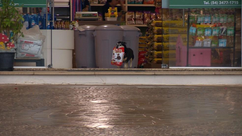 Pituco busca ração na loja na cidade de Paraí (Foto: Reprodução/RBS TV)