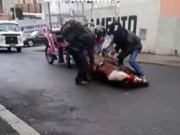 Vídeo mostra cavalo de charrete turística caindo exausto em Poços de Caldas (Foto: Reprodução EPTV)