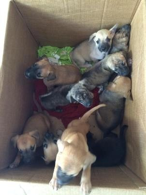 Cachorros abandonados em São José dos Campos (Foto: Fernanda Salhab/Arquivo pessoal)