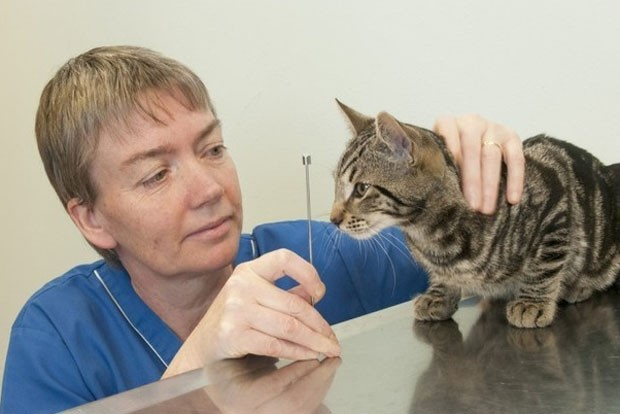 Apesar do susto, gato chamado 'Alphie' passa bem  (Foto: Divulgação/PDSA)