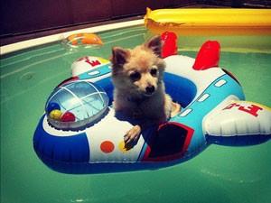O cachorro Chimi Churri durante viagem a Itaipava (Foto: Arquivo pessoal)