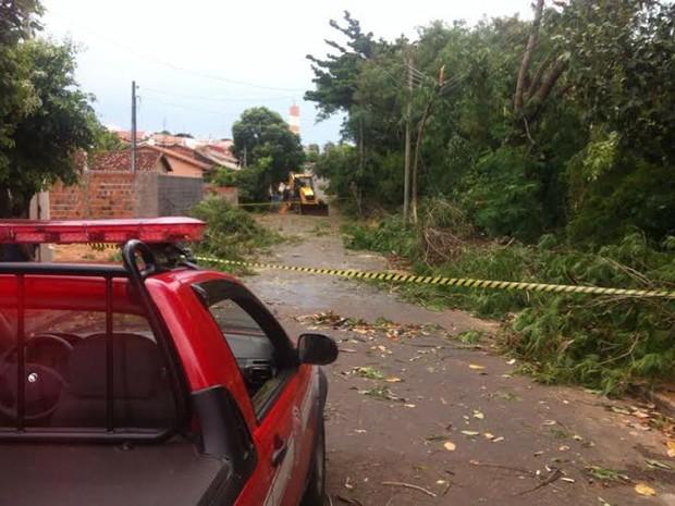Árvores caíram e arracaram os fios de alguns postes (Foto: Renan Saran/Arquivo Pessoal)