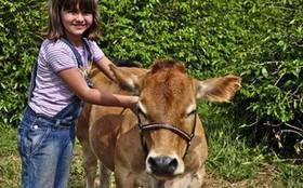 Conheça os animais que aprontam todas em Morde & Assopra