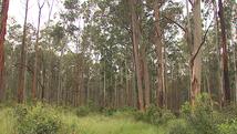 Horto florestal terá 1,6 mil novas árvores (Marlon Tavoni/ EPTV)