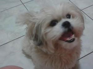 Cachorros morrem envenenados dentro de condomínio em Vila Velha