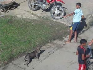 Vídeo mostra crianças participando de çaça aos cachorros. (Foto: Reprodução/ Aragonei Bandeira)