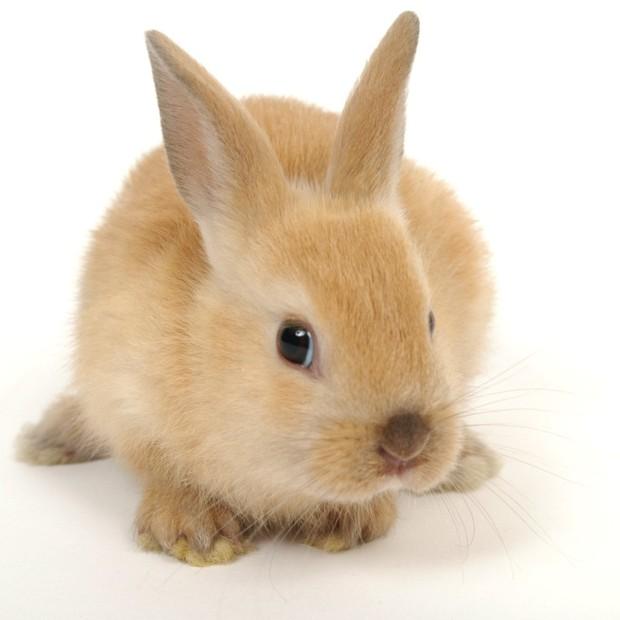 Mais de 1.200 empresas em todo o mundo suspenderam os testes em animais (Foto: Divulgação )
