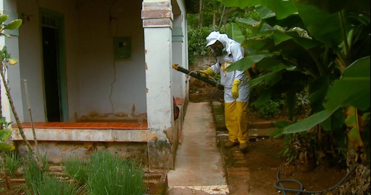 Pirassununga, SP, registra 115 casos de dengue e tenta evitar uma ... - Globo.com