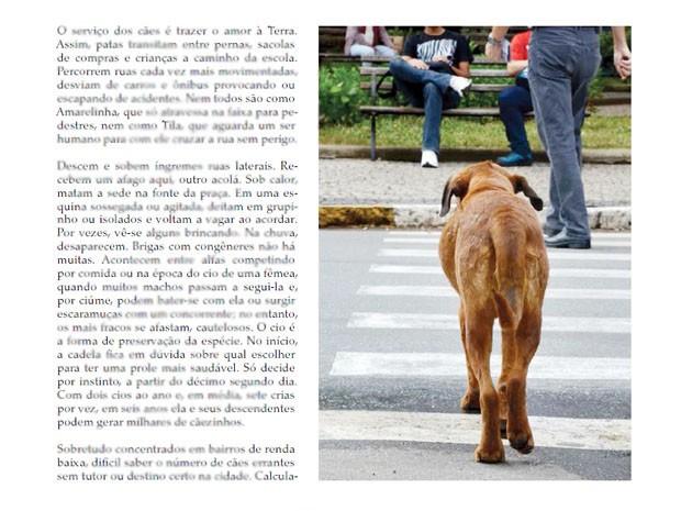 Registro sobre 'Amarelinha', a cachorra que só atravessa na faixa de pedestres (Foto: Livro 'Viver o Amor aos Animais')