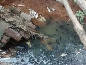 Peixes subiram pelo canal de esgoto e chegaram à terra (Foto: Antônio Milton do Nascimento / TEM Você)