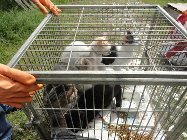 Gatos resgatados em Praia Grande, SP (Foto: Divulgação/ONG OFA-PG)