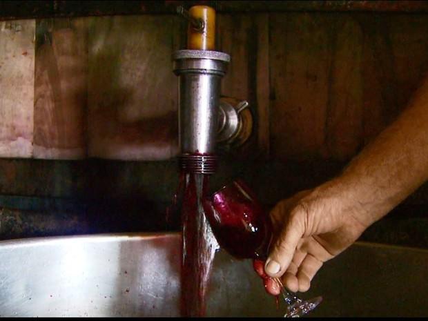 Excesso de chuva comprometeu produção de uva no Sul de Minas (Foto: Reprodução EPTV)