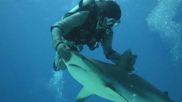 """Mergulhador italiano diz que faz """"massagem"""" no nariz de tubarões para deixá-los relaxados  (Foto: Riccardo Sturla Avogadri)"""