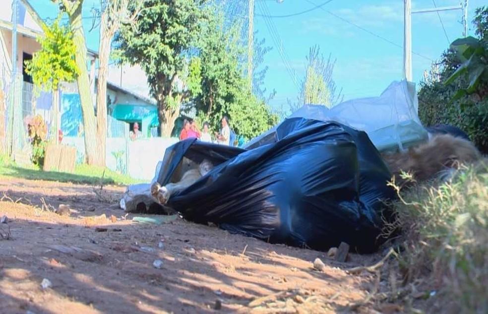 Comunidade tem se mobilizado para cuidar dos filhotes de cães mortos em Cachoeira do Sul (Foto: Reprodução/RBS TV)