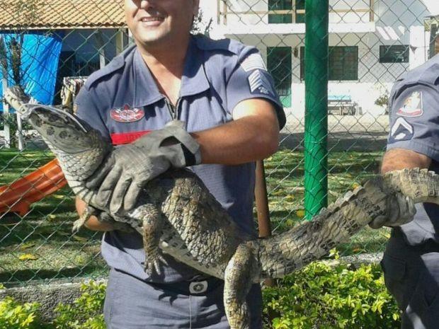 Jacaré é encontrado em frente a creche de Guaratinguetá, SP (Foto: Arquivo Pessoal/Isabel Aquino)
