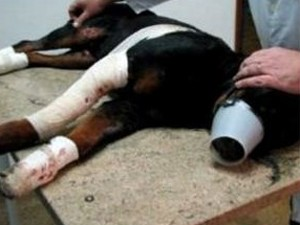 Lobo, que morreu após ser arrastado pelo dono em Piracicaba (Foto: Edijan Del Santo/EPTV)