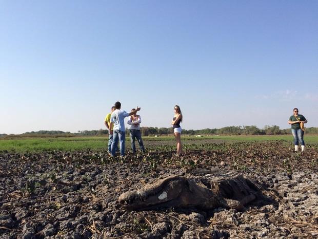 Jacarés morrem presos na lama após lago secar (Foto: Cassiano Rolim/TV Anhanguera)
