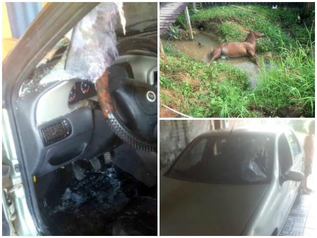 Acidente entre cavalo e carro gerou confusão em Cruzeiro do Sul  (Foto: Anny Barbosa/G1)