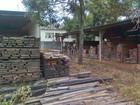 Fiscalização acha em Minas madeira tirada ilegalmente da Amazônia