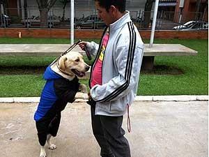 Labrador usa roupa para manter o corpo aquecido (Foto: Andréia Candido/G1)