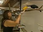 Parque das Aves trata e recupera animais vítimas de tráfico