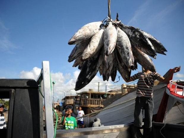 Pescadores trabalham na Indonésia nesta segunda-feira (9). Segundo relatório da FAO, pesca excessiva já afeta 30% das populações de peixes no mundo. (Foto: Sonny Tumbelaka/AFP)