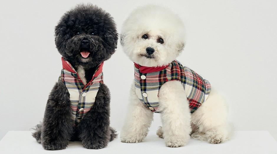Cães vestidos com a roupa da coleção (Foto: Divulgação)