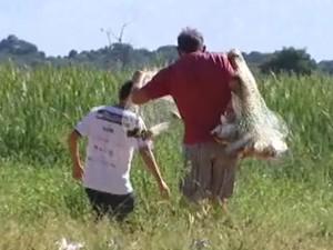 Pescadores tentaram salvar os peixes encalhados (Foto: Reprodução/TV Integração)