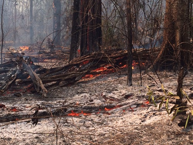 Um terço da Reserva Indígena Araribóia já foi consumido pelo fogo (Foto: Sidney Pereira / TV Mirante)
