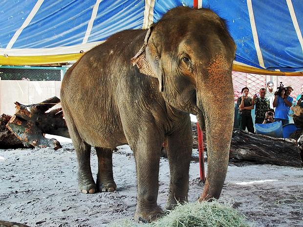 Elefanta Lady será transferida para parque zoobotânico de João Pessoa  (Foto: Divulgação/Secom-JP)