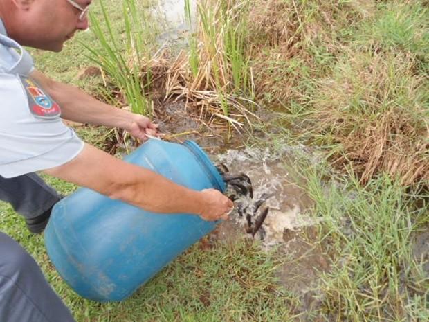 Policial ambiental devolve peixes capturados para a natureza (Foto: Divulgação/Polícia Ambiental)