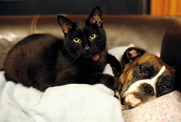 O gato chamado 'Balthazar'  e a cadela 'Roxana' chegam a dividir a mesma cama em uma casa em Liptovsky Mikulás, na Eslováquia. (Foto: Joe Klamar/AFP)