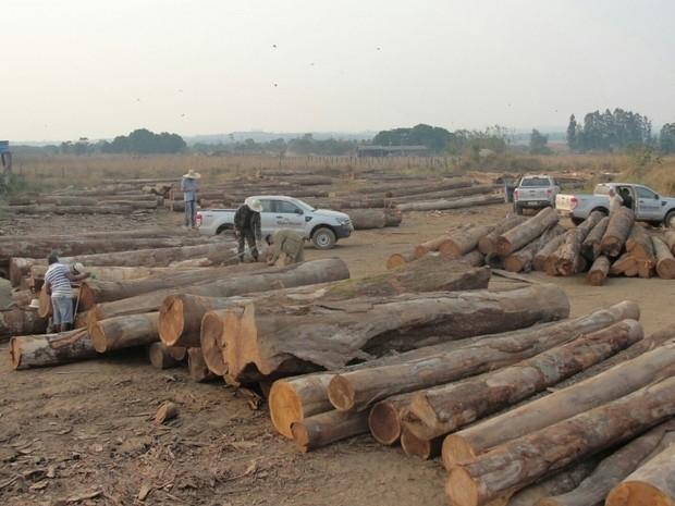 Produto era advindo de desmatamento ilegal em propriedades rurais. (Foto: Assessoria/Sema-MT)