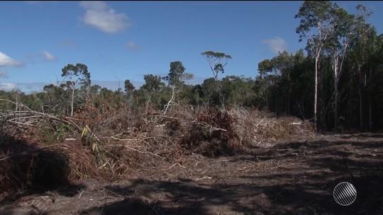 Prefeitura de cidade da BA que mais desmatou Mata Atlântica em 2016 apura retirada de madeira ilegal