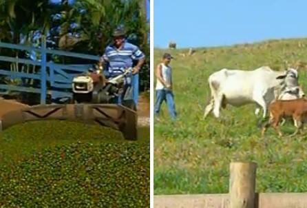Agricultores e pecuaristas serão beneficiados (Foto: Reprodução / Inter TV)