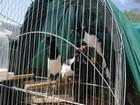 Animais são resgatados em operação realizada pela CPRH no interior de PE