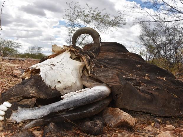 paisagem seca RN especial (Foto: Anderson Barbosa e Fred Carvalho/G1)