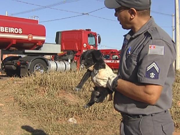 Cachorro foi encontrado pelos bombeiros no meio do incêndio (Foto: Reprodução/ TV TEM)