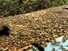 Criador de abelhas consegue extrair mel sem usar muita fumaça