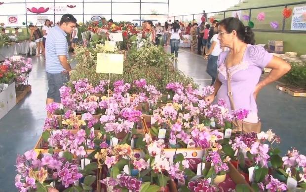 7ª Exposição de Flores de Holambra ocorre em Ariquemes (Foto: Bom Dia Amazônia)