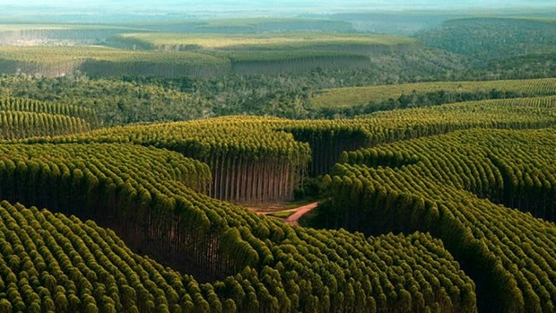 Corrida dos Eucaliptos euatleta (Foto: Divulgação)