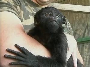 Animal foi encontrado na Serra (Foto: Reprodução RBS TV)