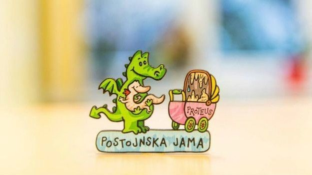 O proteus é uma espécie de ícone na Eslovênia, onde aparecia em moedas antes da chegada do euro; há centenas de anos, quando enchentes expulsavam as criaturas para fora das cavernas, eram tidas como bebês de dragões  (Foto: Iztak Medja Potonsjka Jama)